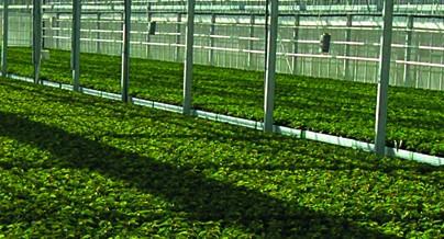 Riešenia pre poľnohospodárstvo